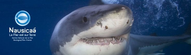 Impact de l'homme sur les populations de requins | Les requins