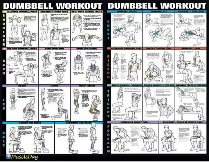 Body Workout: Dumbbell Full Body Workout