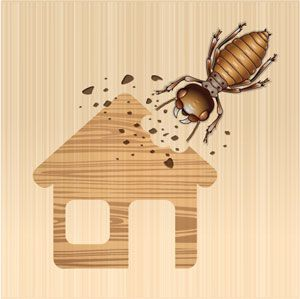 Drywood Termites - How to discover and exterminate. - https://twitter.com/ApolloXPestCtrl/status/619622467846344704