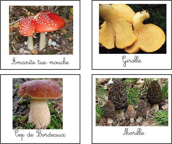 cartes-nomenclature-espc3a8ces-de-champignons.png (1176×987)