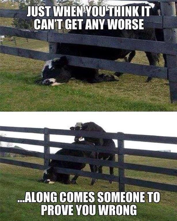 ❦ Cowboy Humor - Life... Almost always happens like this