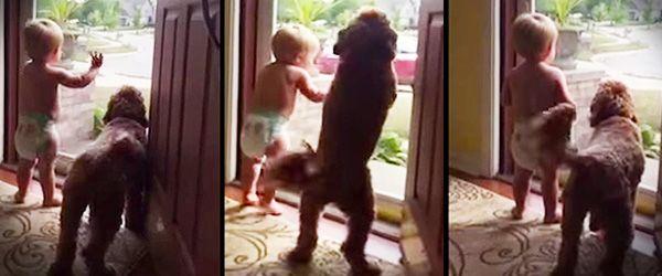 Este pai está finalmente de volta a casa no final de um dia de trabalho. Quando o bebé e o cão ouvem o carro a estacionar os dois ficam em delírio. Tão bonito… :) TopaIsto