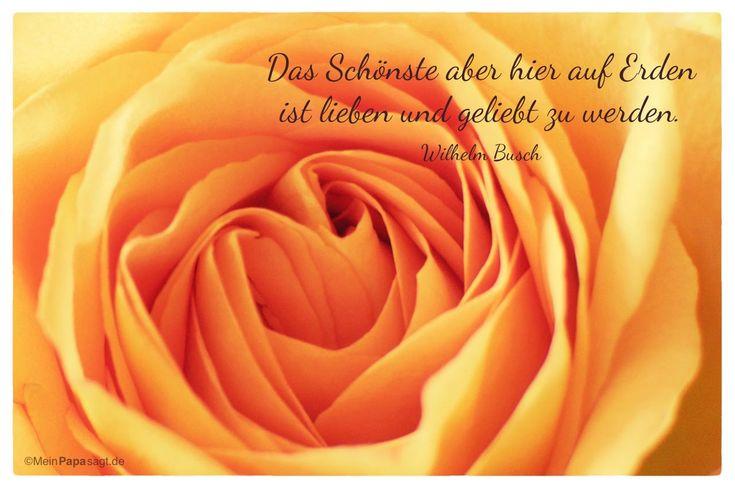 Mein Papa sagt...   Das Schönste aber hier auf Erden ist lieben und geliebt zu werden.  Wilhelm Busch    Weisheiten und Zitate TÄGLICH NEU auf www.MeinPapasagt.de