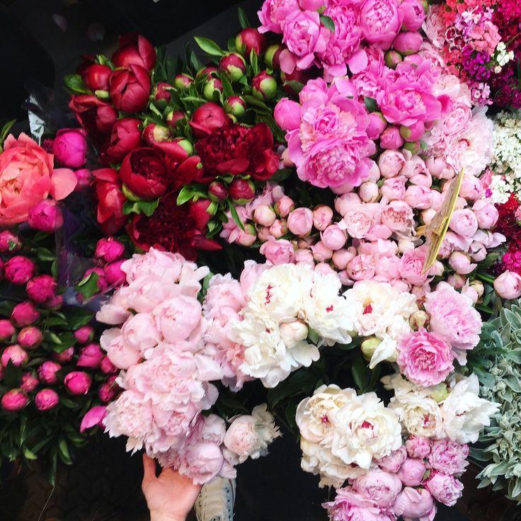 Flowers at Marche des Enfants Rouges in Paris Amazing Flowers, Beautiful Roses, Beautiful Gardens, Beautiful Flowers, Shabby Flowers, Pink Flowers, My Flower, Flower Power, Garden Landscape Design