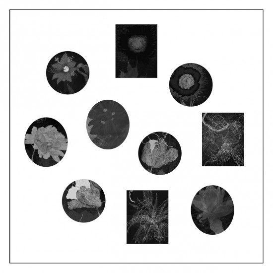 Florilegium Noir 2013 from Dominion Archival giclee print ed of 3