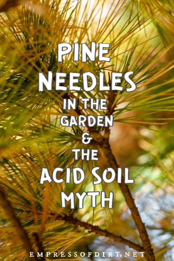 71cdd6dd802e499ad773d45db35307f2 - Are Pine Needles Good For Gardens