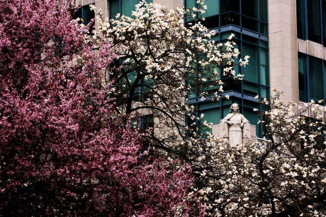 Spring In Vancouver | Norma Ibarra