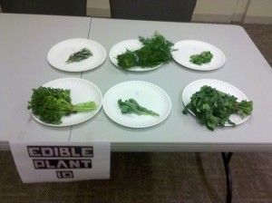 Hunger Games activities! AWESOME! (I.D. edible plants etc...)