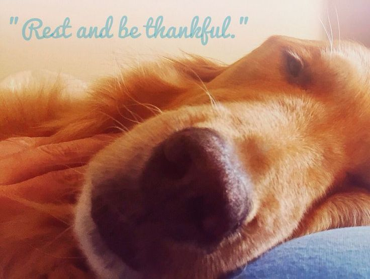 """Rest and be thankful."" - William Wordsworth - with Tuesday in Michigan. [Nov. 1, 2015]"