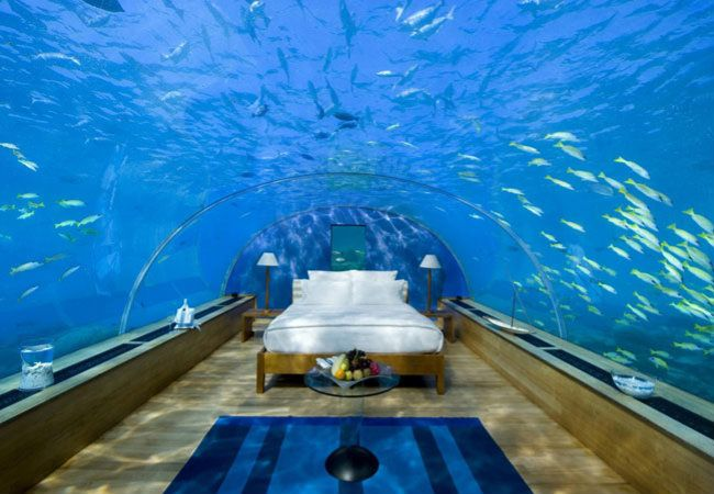 Você acorda e tem um tubarão passando sobre a sua cabeça. Sonho? Alucinação? Não, é um hotel submarino em Fiji!