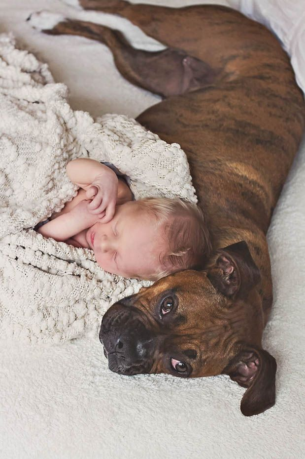 Will need a photo like this of Brooklyn with Kona. I melted.. #NewbornSession