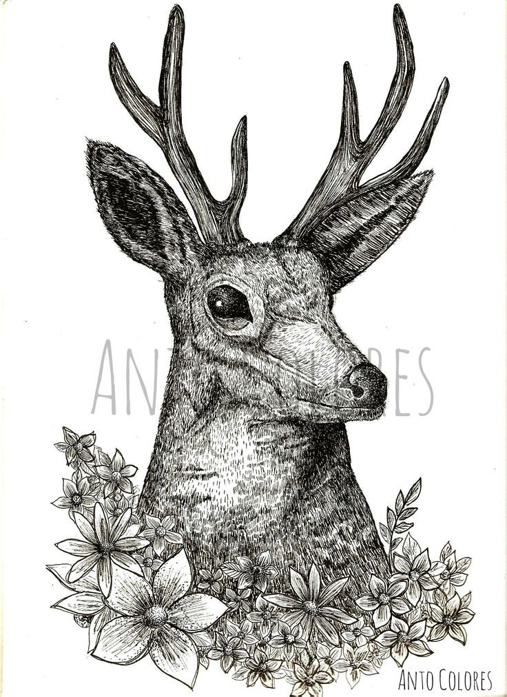 #deer #venado #antocolores #ilustracion #illustration  https://www.facebook.com/AntoColores/?ref=aymt_homepage_panel  www.instagram.com/anto.colores