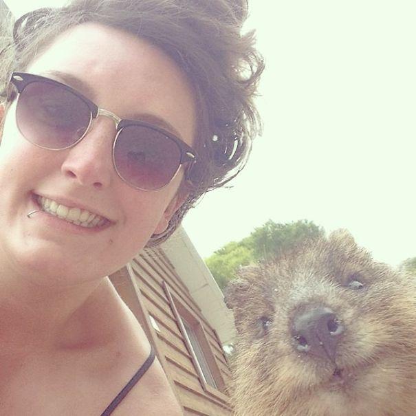 Quokka Selfie is the cutest trend in Australia right now.
