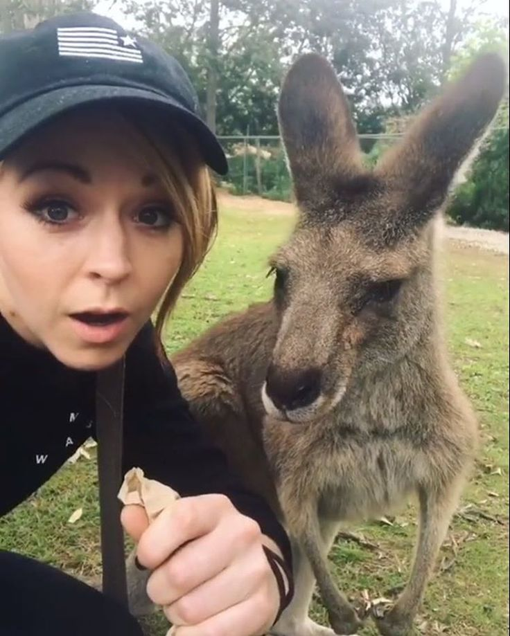 "#WEAREGAVI (@lindseygavi) på Instagram: ""The picture lindsey was trying to get with the kangaroo  i've only seen one kangaroo in my whole…"""