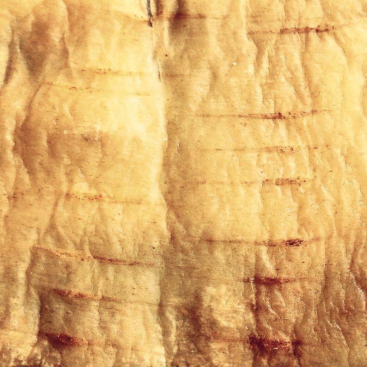 Edible bark Edible #wood Skin of pastinak