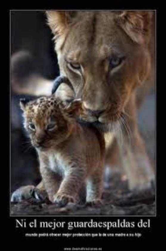 Soy madre, pero si se meten con mi cachorro soy leona ...