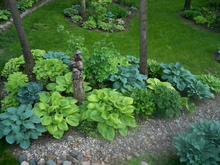 Hostas and dry riverbed