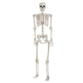 Halloween Posable Skeleton - Lifesize