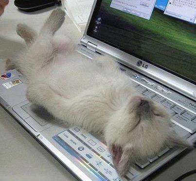 vicces cicák - Google keresés