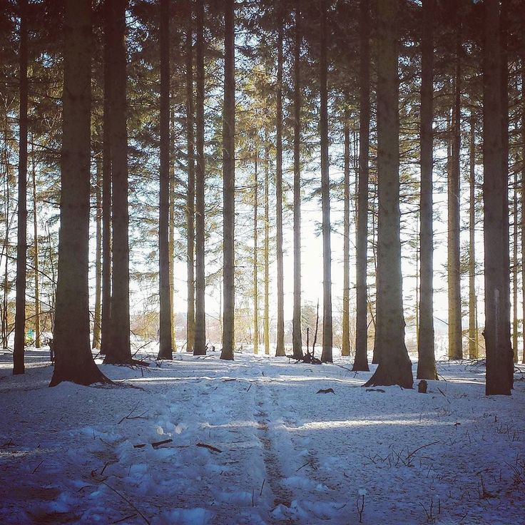 #neige #belgique #belgium #visitbelgium #winter #instatravel #travelgram #travelling #instagood #igers #igersbelgium #explore #slowtravel #neverstopexploring