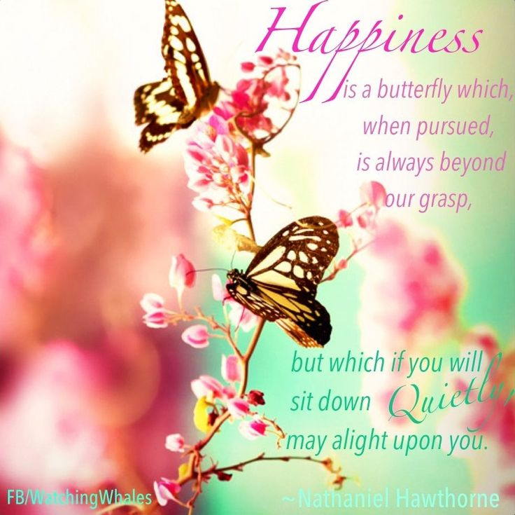 Beauti Full Love Qutes: 684 Best Images About Butterfly Love On Pinterest
