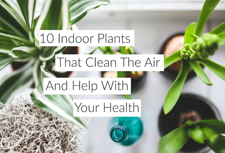 Plants can improve air quality. So today I am going to share the scoop on some indoor plants that do good, while looking great at the same time!