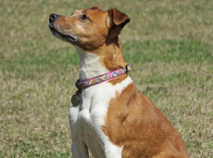 Tilly Find A Pet Rspca Org Uk With Images Dog Adoption Pets Animals