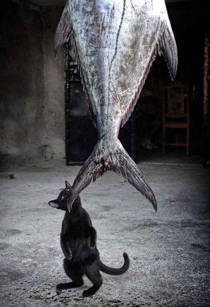 Курьезное разоблачение кошек - В мире чудес