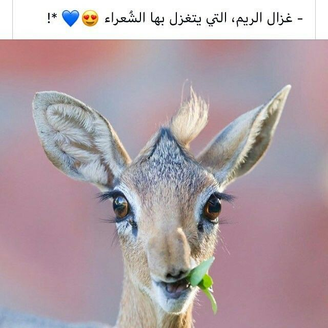 Pin By Hie07 On ليتها تقرأ Cute Animals Animals Wild Animals Beautiful