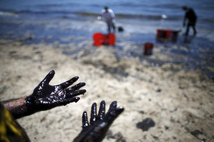 Уже две недели бригады рабочих и волонтёры пытаются очистить 15 км тихоокеанского побережья. Вред нанесенный природе оценить невозможно.