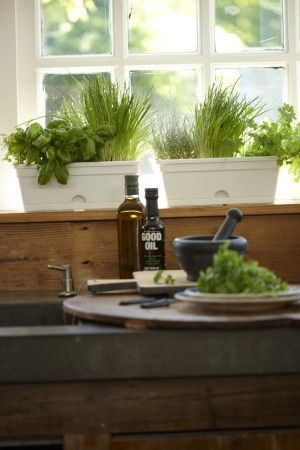 Bakken met kruiden voor in de keuken. Naast planten die gewoon mooi zijn om naar te kijken, zijn er natuurlijk ook nog planten die lekker smaken zoals deze keukenkruiden. Zet ze in een langwerpige bak op je aanrecht en je hebt altijd verse kruiden binnen handbereik. Elho