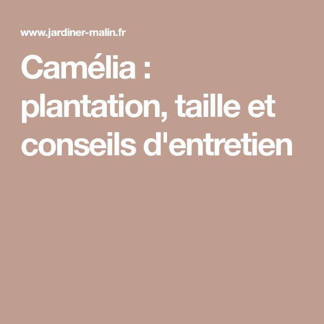 Camélia : plantation, taille et conseils d'entretien