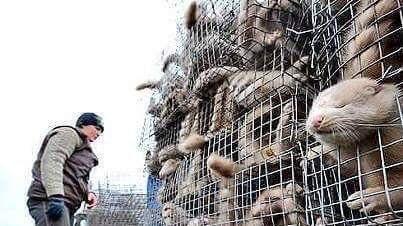 Schluss mit Tierquälerei durch unnötigen Tierpelz an Kleidungsstücke - EU weit!! / No more animal cruelty by unnecessary animal fur for garments - EU wide!!