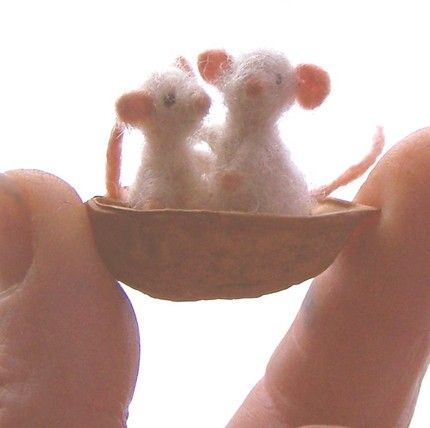 tiny mice in a walnut shell
