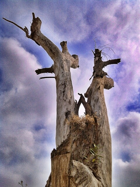 Un tronco seco es bello aún. La naturaleza es hermosa. A dead tree trunk is still beautiful. Nature is beautiful.