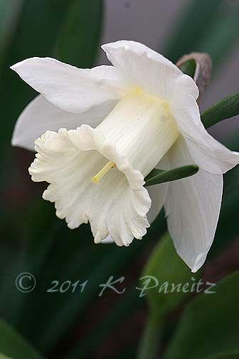 Kaseys Korner: orchids