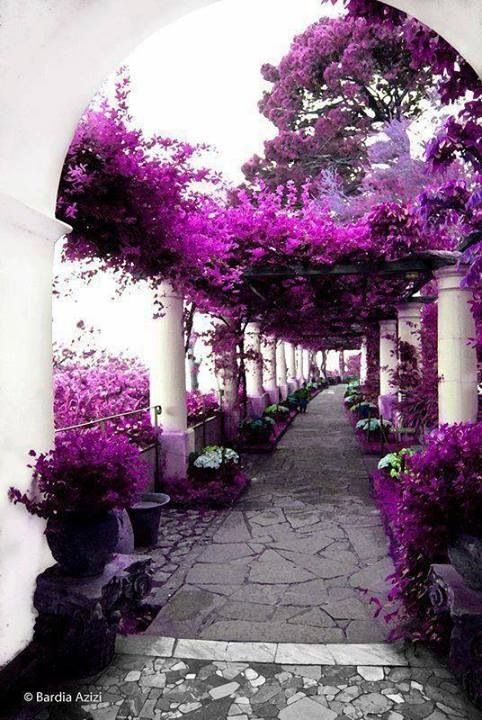 the absolutely stunning walkway of villa di san michele. (capri) #travelcolorfullyBougainvillea, Walks, Walkways, Colors, Beautiful Places, House, Capri Italy, Purple Gardens, Purple Flower