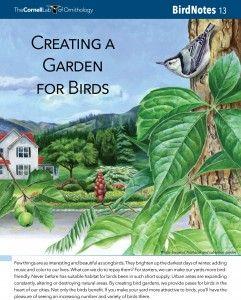 Creating a Garden for Birds - from FeederWatch