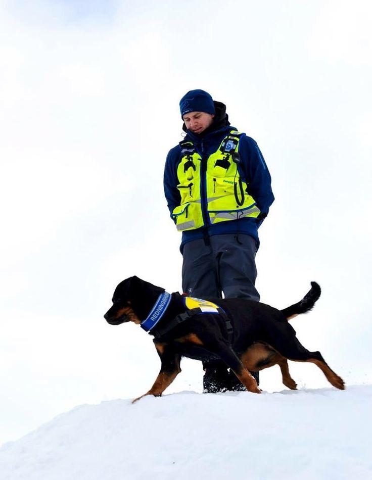 @annvenne: Åtte redningshunder var på vei til Kvamskogen http://bit.ly/1VZXHwh via @redningshunder