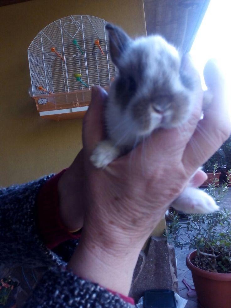 Ciopy..Piccolo. Coniglietto.   .