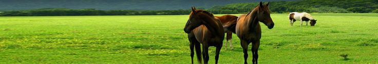 Cowboy Magic Grooming Products » Blog Archive Horse Grooming Tips for Winter http://www.cowboymagic.com/horse-grooming-tips-for-winter/#