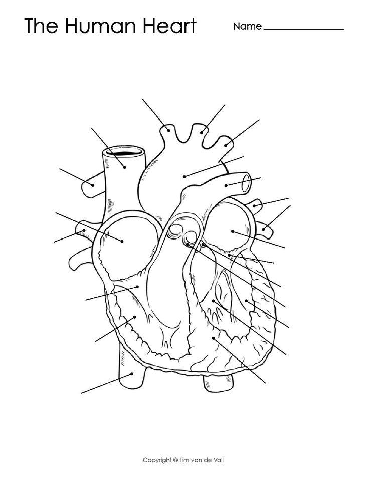 Human Heart Diagram - Unlabeled - Tim's Printables | Heart ...