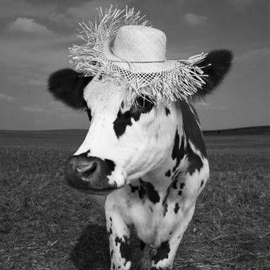 Hermione, the cow. Jean-Baptiste Mondino, the photographer. Photography exposition «Oh la vache!» in Paris.