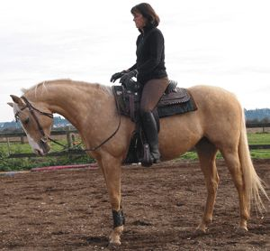 This is a great article about getting your horse behind the bit and collection in general