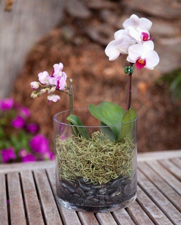 Entretien des orchidées – savoir tout sur ces belles fleurs exotiques