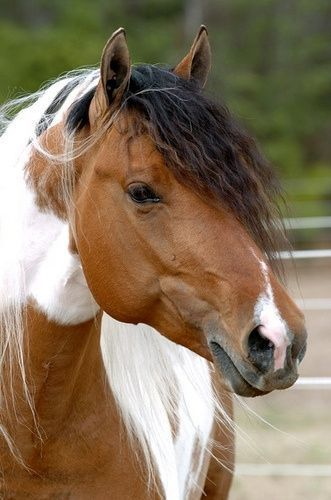 Beautiful Pinto Colored Horse
