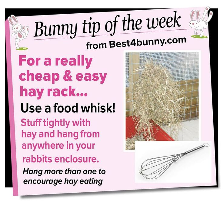 Bunny tip - For a cheap hay rack, use a food whisk!