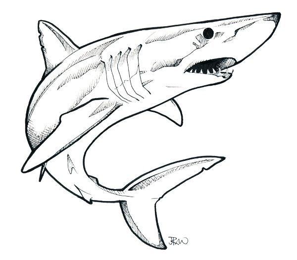 shark drawing easy line