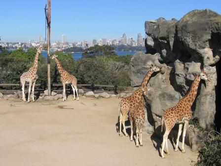 TARONGA ZOO is one of Sydney's most recognisable attraction. The Zoo offers many opportunities for visitors to get close to the animals and find out more about how they live - you can attend the free shows, keeper talks, or experience a close up encounter with an animal.