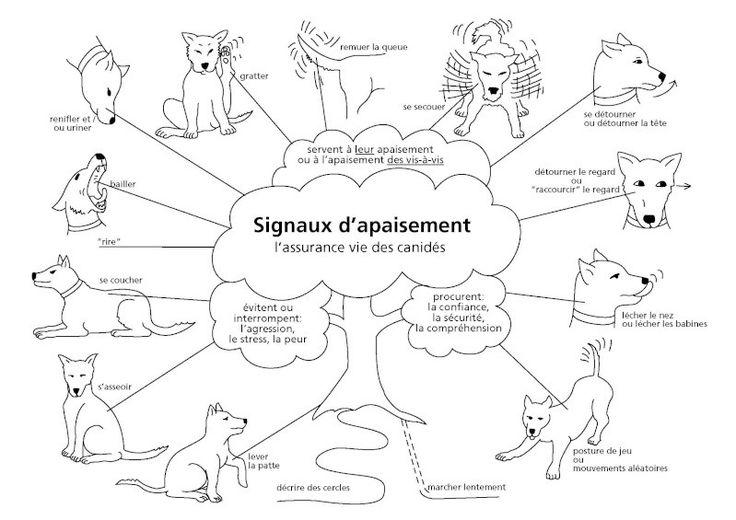 Services pour animaux - Ecole privée - Cours d'éducation - Tout'Pattes